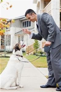 obey-dog